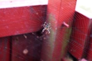 Spinne beim Campingplatz