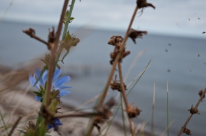 Blumen am Abgrund.