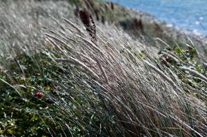 Pflanzen biegen sich im Winde.