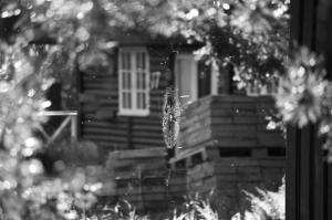 Spinnennetz vor Haus.