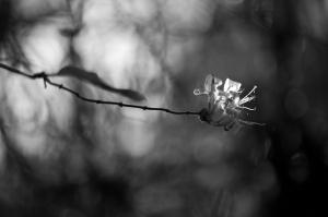Eine sehr theatralische Blume.