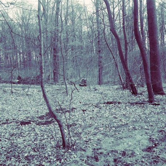 Wald in Lüneburg
