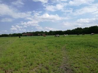 4. Füttern des L-Pferdes