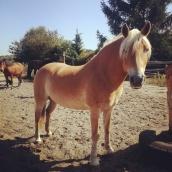 T-Pony