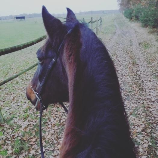 L-Pferd